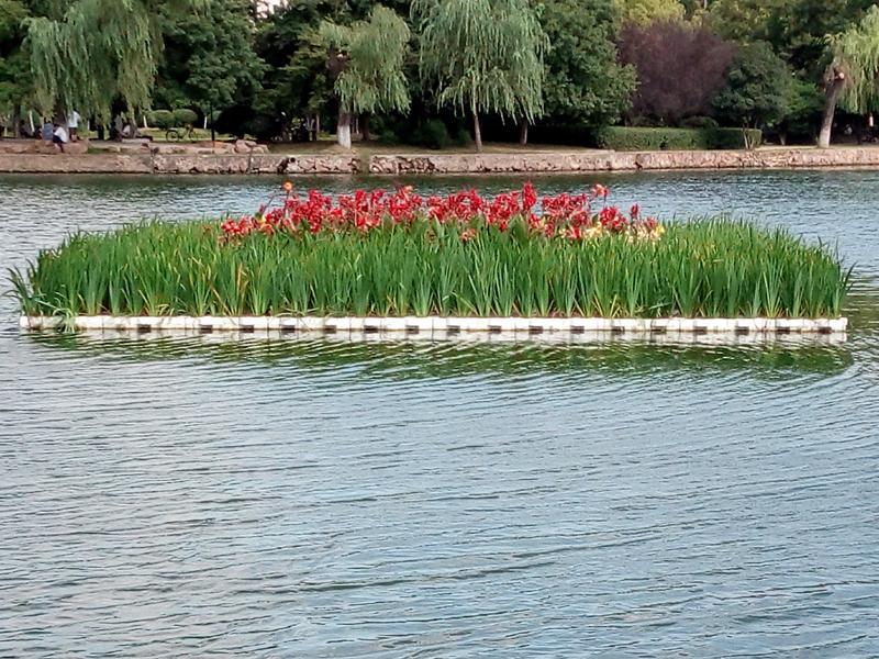 人工浮岛-天蓝水生植物