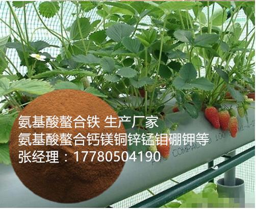 氨基酸螯合铁级有机铁≥10% 肥料级/饲料成都厂家供应批发